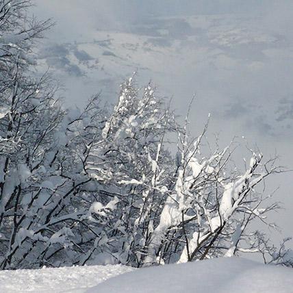 155x155_Siberia-Emiliana12
