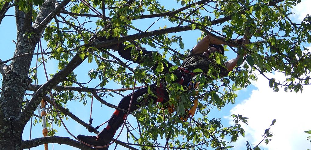 TreeClimbing2_slim