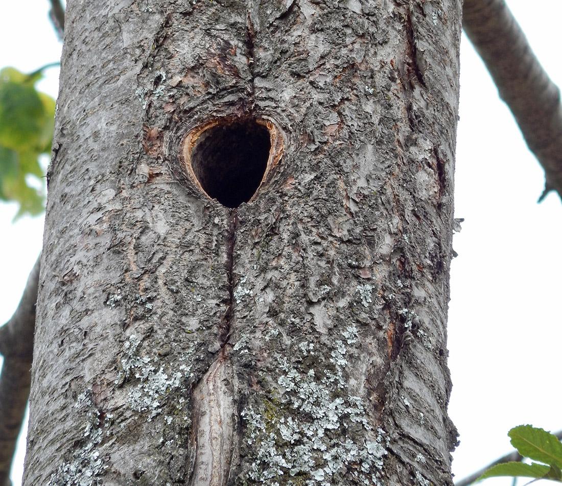 Storia di una potatura fattoria stelo for Il nido del picchio