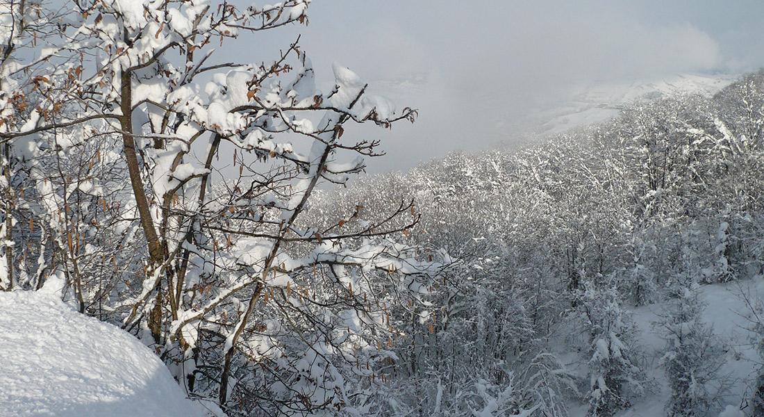 Siberia-Emiliana10