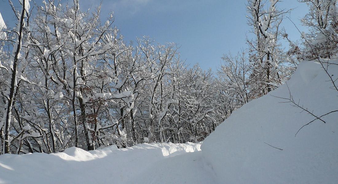 Siberia-Emiliana11