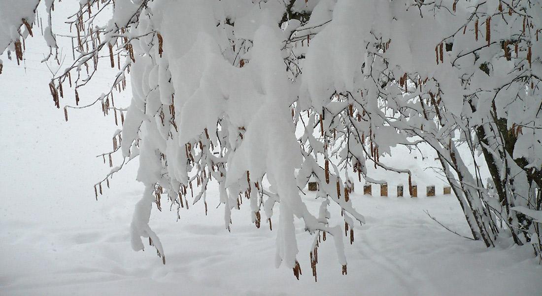 Siberia-Emiliana2