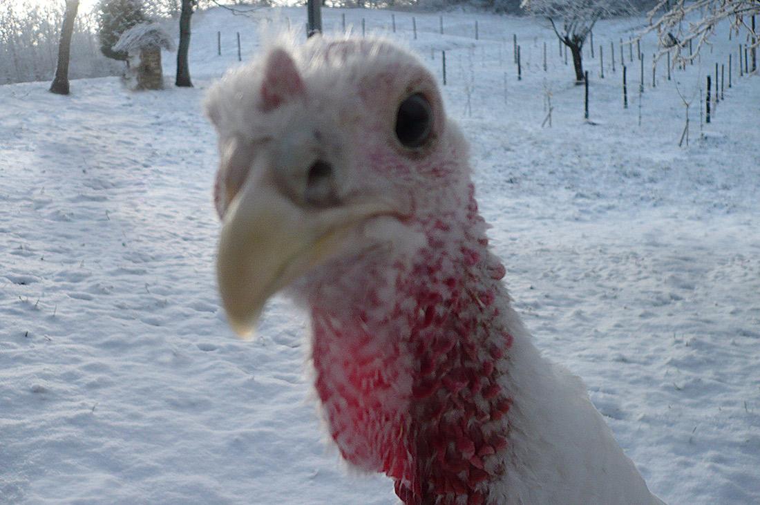 Turkey-snow