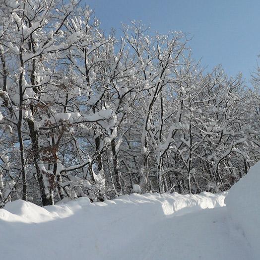 155x155_Siberia-Emiliana11