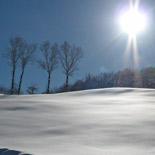 155x155_Siberia-Emiliana16