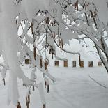 155x155_Siberia-Emiliana2
