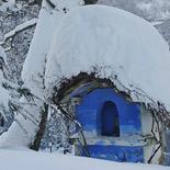 155x155_Siberia-Emiliana8
