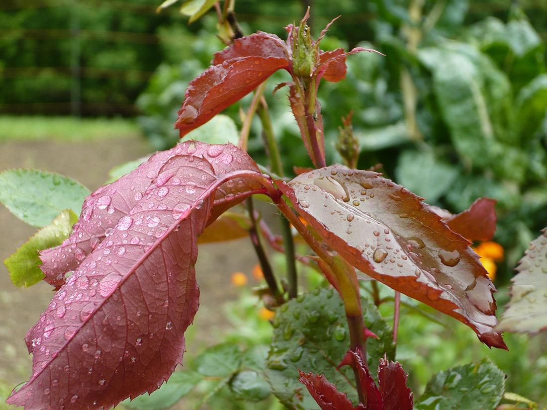 dopo-la-pioggia2